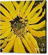 Linda's Arizona Sunflower 2 Acrylic Print