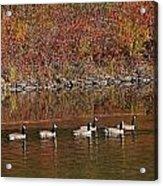 Line Of Geese On The Quinapoxet River Acrylic Print
