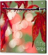 Line Of Reflections Acrylic Print by Anne Gilbert
