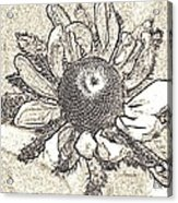 Linear Coneflower Acrylic Print