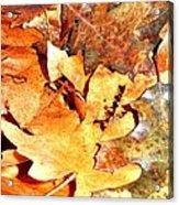 Lines Of Fall Acrylic Print