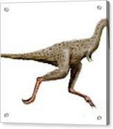 Linhenykus Dinosaur Acrylic Print