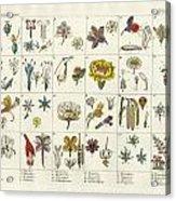 Linne's Plant System Acrylic Print
