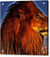 Lion - King Of Animals Acrylic Print