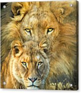 Lion And Lioness- African Royalty Acrylic Print
