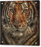 Lion Canvas Portrait Acrylic Print