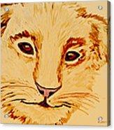 Lion Cub Acrylic Print by Elizabeth S Zulauf