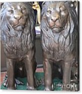 Lion Hearted Share Acrylic Print