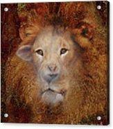 Lion Lamb Face Acrylic Print