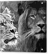 Lion Pair Black And White Acrylic Print