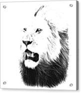 Lion Portrait - Lions Of The Masai Mara Acrylic Print by Aidan Moran