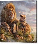 Lion Pride Acrylic Print