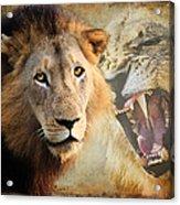 Lion Profile Acrylic Print