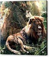 Lion Spirit Acrylic Print