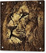 Lion -wall Art Acrylic Print