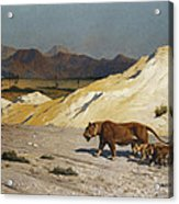 Lioness And Cubs Acrylic Print by Jean Leon Gerome