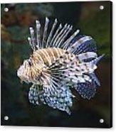 Lionfish - Gatlinburg Tn Ripleys Aquarium Acrylic Print by Dave Allen