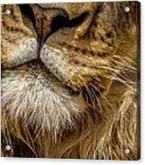 Lions Mouth 2 Acrylic Print