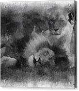 Lions Photo Art 01 Acrylic Print