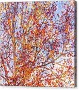 Liquidambar Square Abstract Acrylic Print