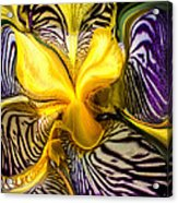Liquified Orchid Acrylic Print