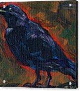Lisa's Blackbird Acrylic Print