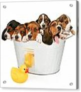 Litter Of Puppies In A Bathtub Acrylic Print