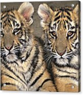 Little Angels Bengal Tigers Endangered Wildlife Rescue Acrylic Print