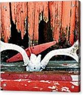 Little Antlers 2 Acrylic Print