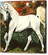 Little Arabian Acrylic Print