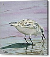 Little Bird On The Beach Acrylic Print