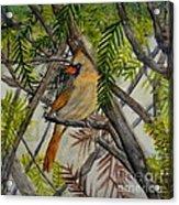 Little Birdie Acrylic Print