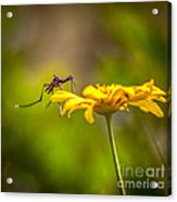 Little Biter Acrylic Print by Marvin Spates