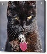 Little Black Kitty Acrylic Print