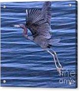 Little Blue Air Acrylic Print