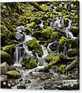 Little Cascades Acrylic Print