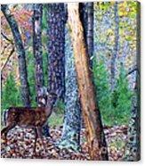 Little Deer In Autumn Acrylic Print