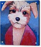 Little Dog Acrylic Print by Lutz Baar