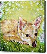 Little Dog Named Fern Acrylic Print