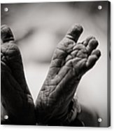 Little Feet Acrylic Print