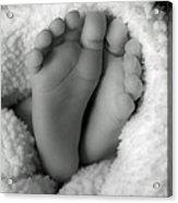 Little Feet Acrylic Print by Mamie Thornbrue
