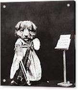 Little Fiddler Acrylic Print