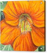 Little Flower Acrylic Print