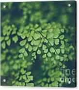 Little Green Leaves Acrylic Print
