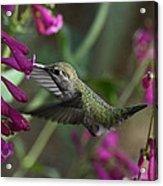 Little Happy Wings  Acrylic Print