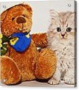 little Kitten with her Teddybear Acrylic Print