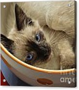Little Miss Blue Eyes Acrylic Print by Andee Design