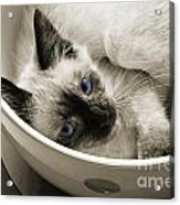 Little Miss Blue Eyes B W Acrylic Print by Andee Design