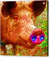 Little Miss Piggy - 2013-0108 Acrylic Print by Wingsdomain Art and Photography
