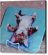 Little Napper Cutting And Serving Board Acrylic Print